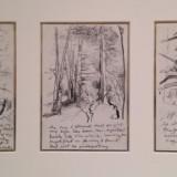 Woods Study, 1996